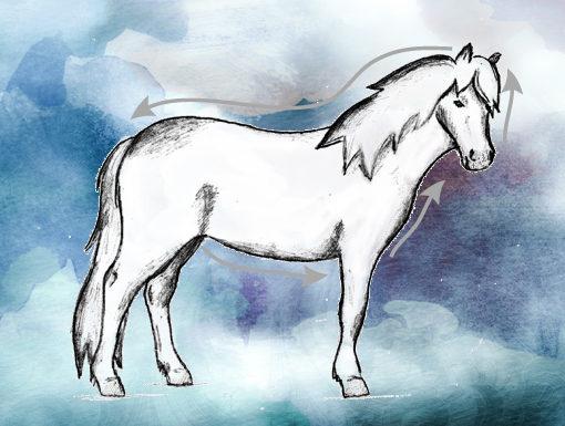 Qi Massage Pferd TCM