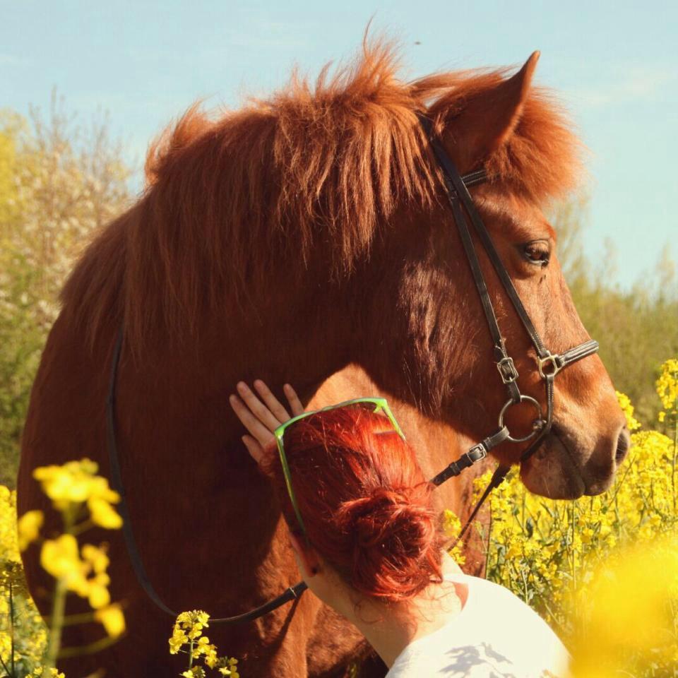 Eigenes Pferd