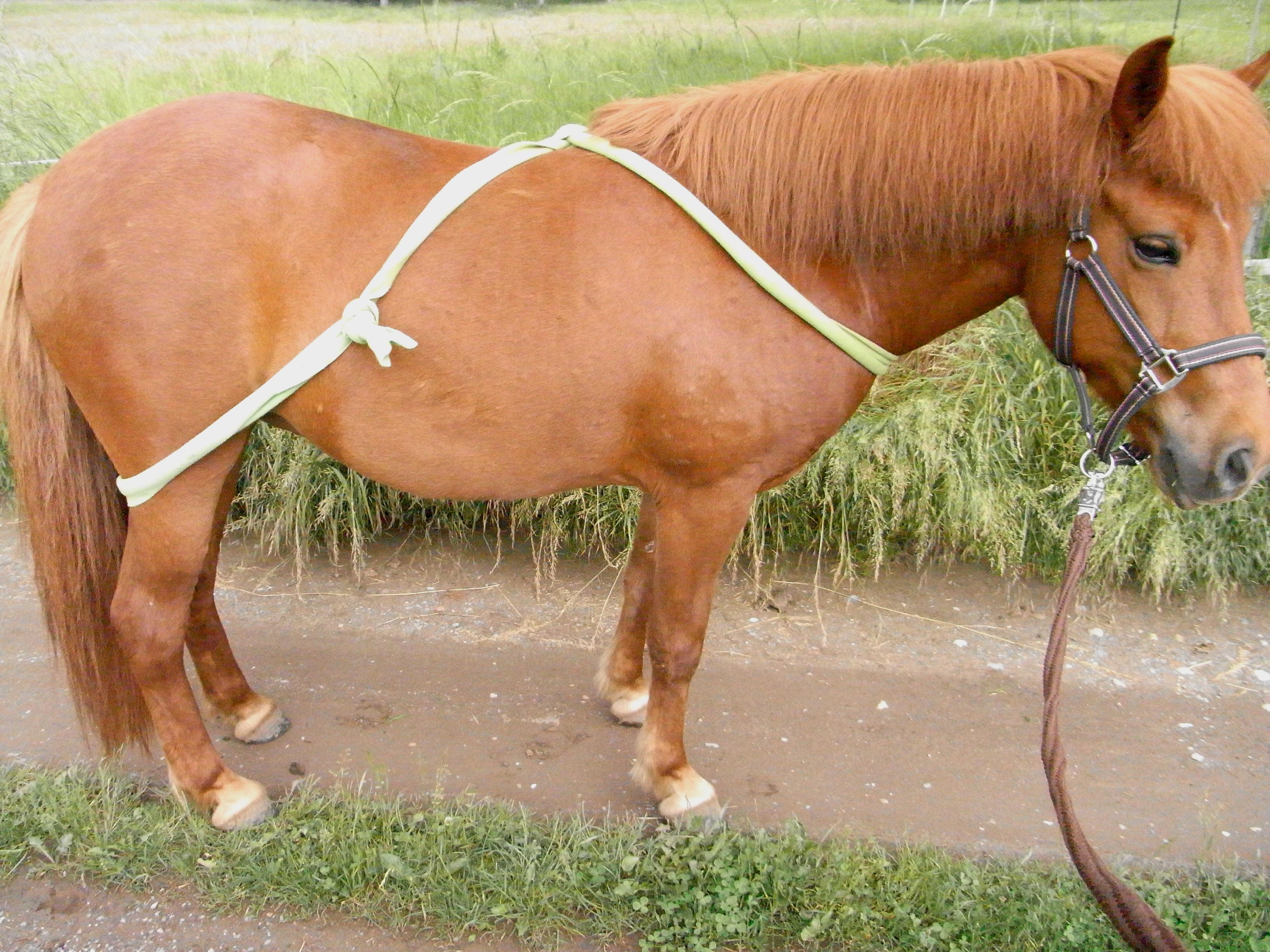 Körperband Pferd