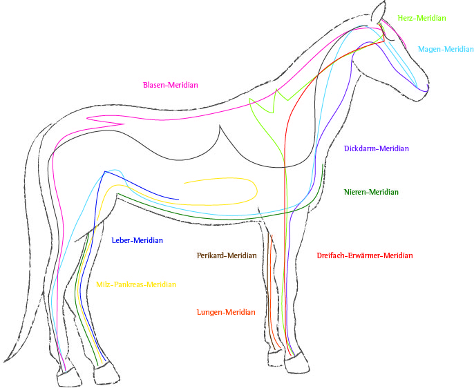 Meridiane Pferd