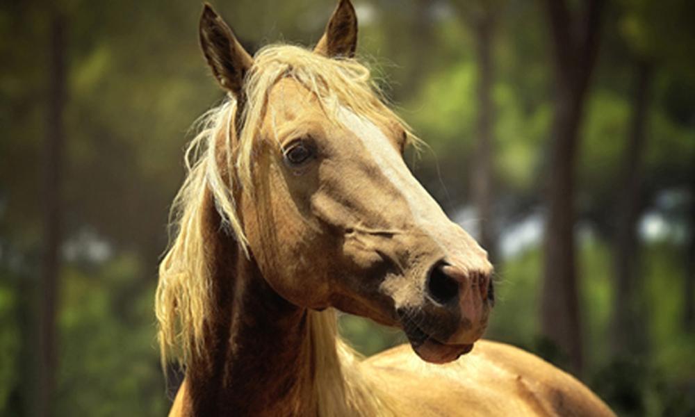 Pferd Training Motivation