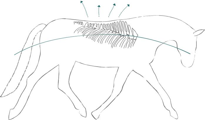 Pferd Dehnungshaltung