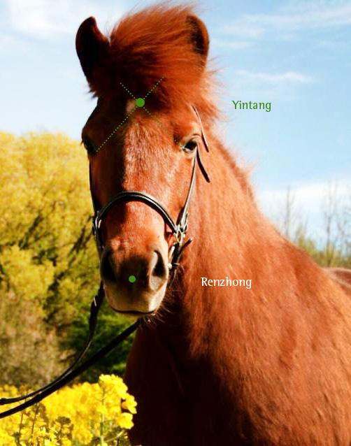 Yin Yang Ausgleich Pferd