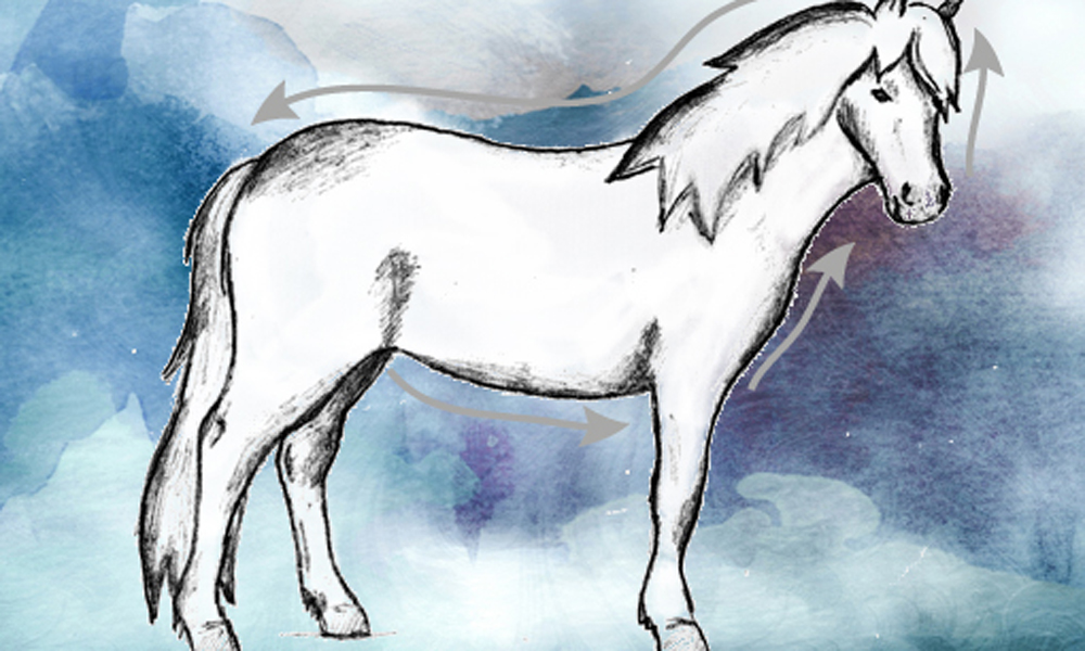 Qi-Massage Pferd
