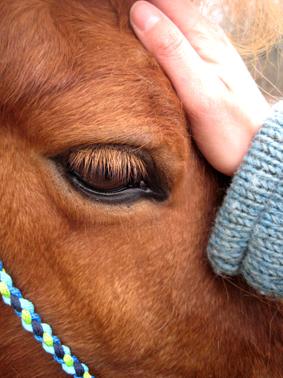 Akupressur Pferd