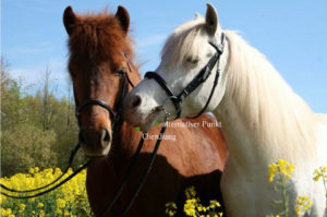 Akupunkturpunkte Pferd
