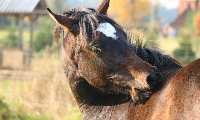 Pferd Fellpflege