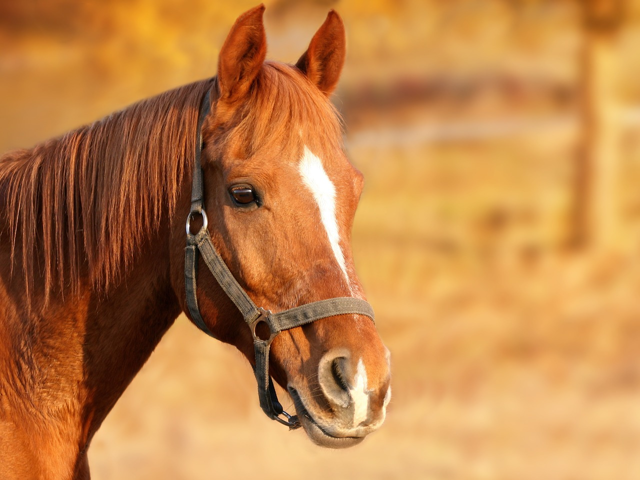 Pferdetypen TCM
