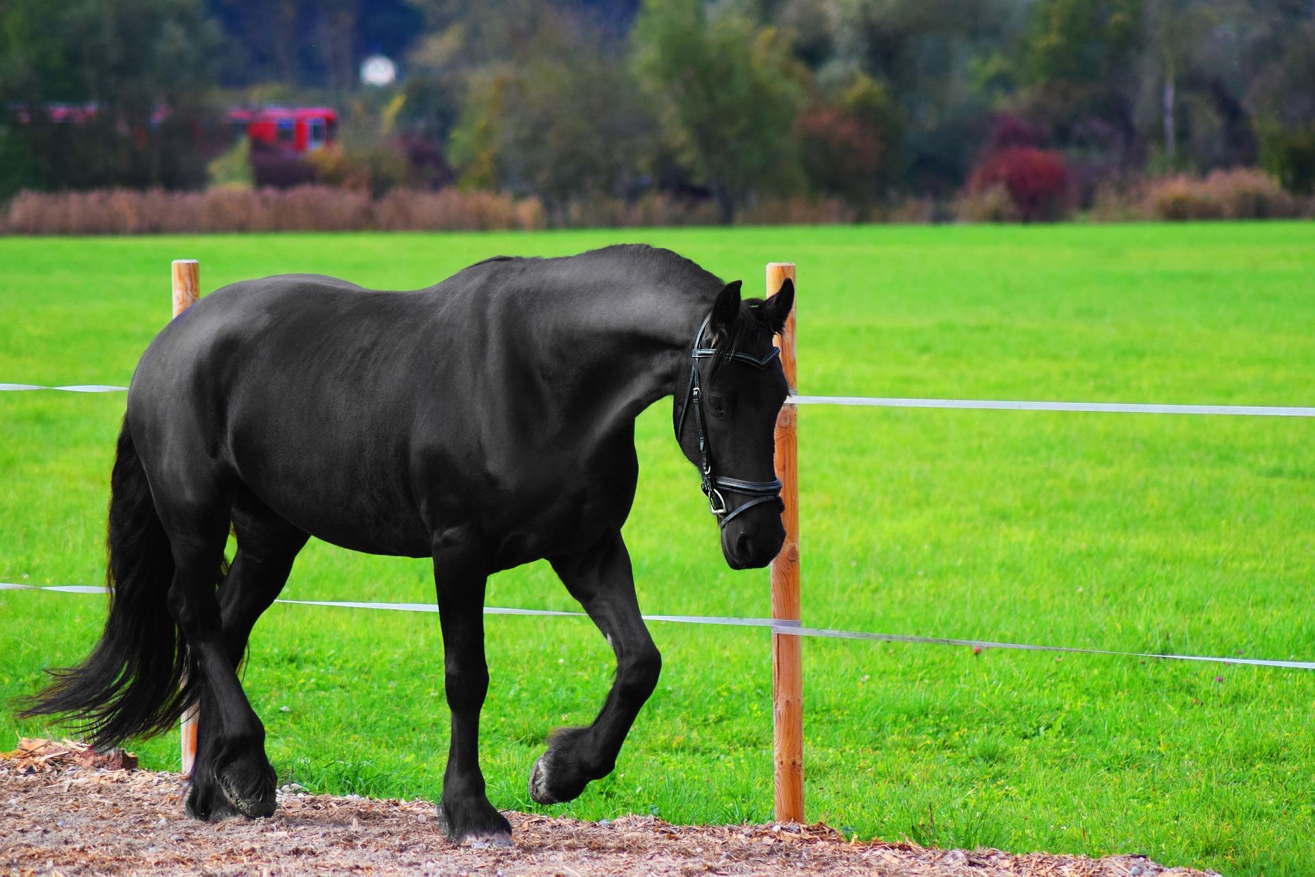 Unterhalsmuskulatur Pferd