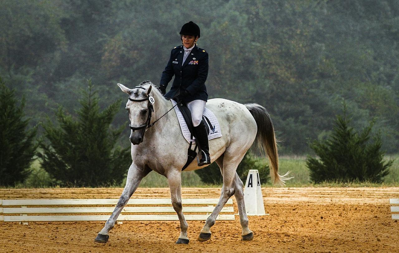 Dehnungshaltung Pferd