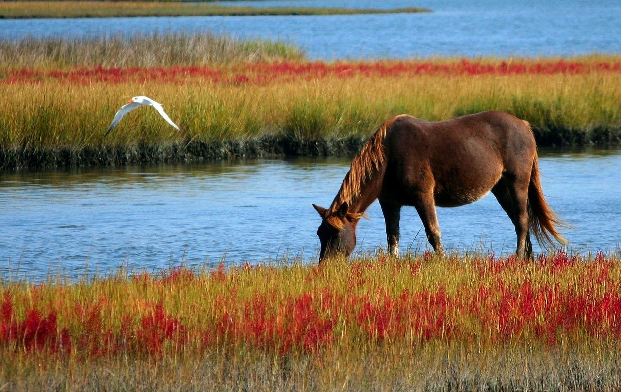 Qi Meridiane Pferd
