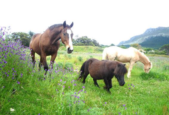 Pferd Training