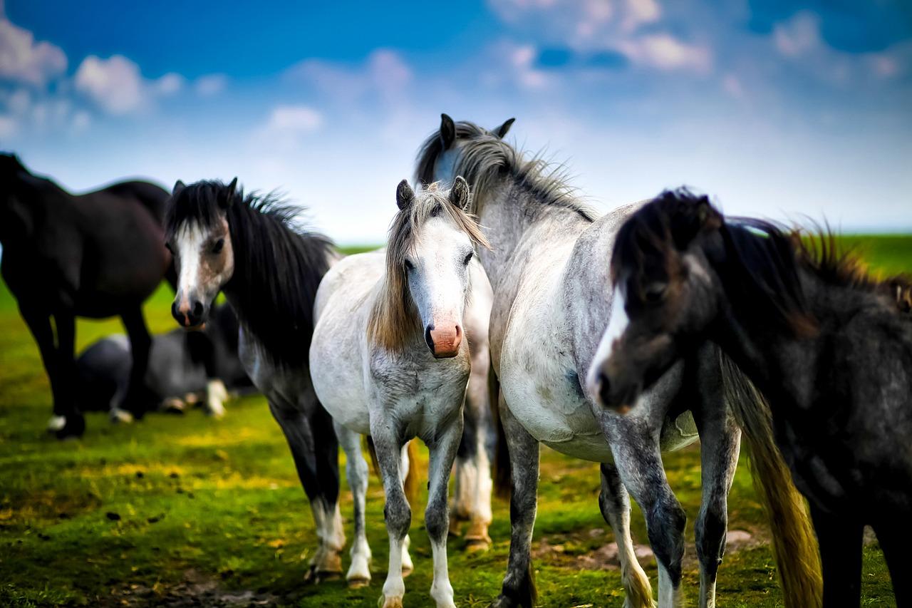 Traditionelle Chinesische Medizin Pferd