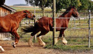 Pferd Ärger