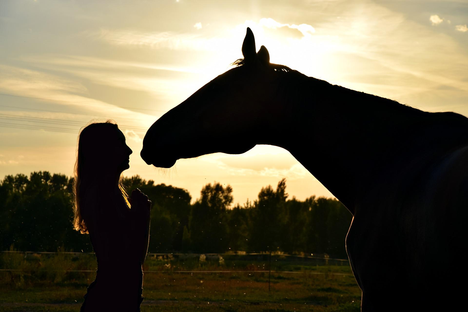 Pferd Achtsamkeit