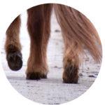 Pferdephysiotherapie Christina Schumann Düren