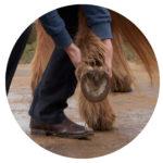 Physiotherapie Christina Schumann Pferd Düren