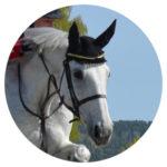 Pferdephysiotherapie Christina Schumann