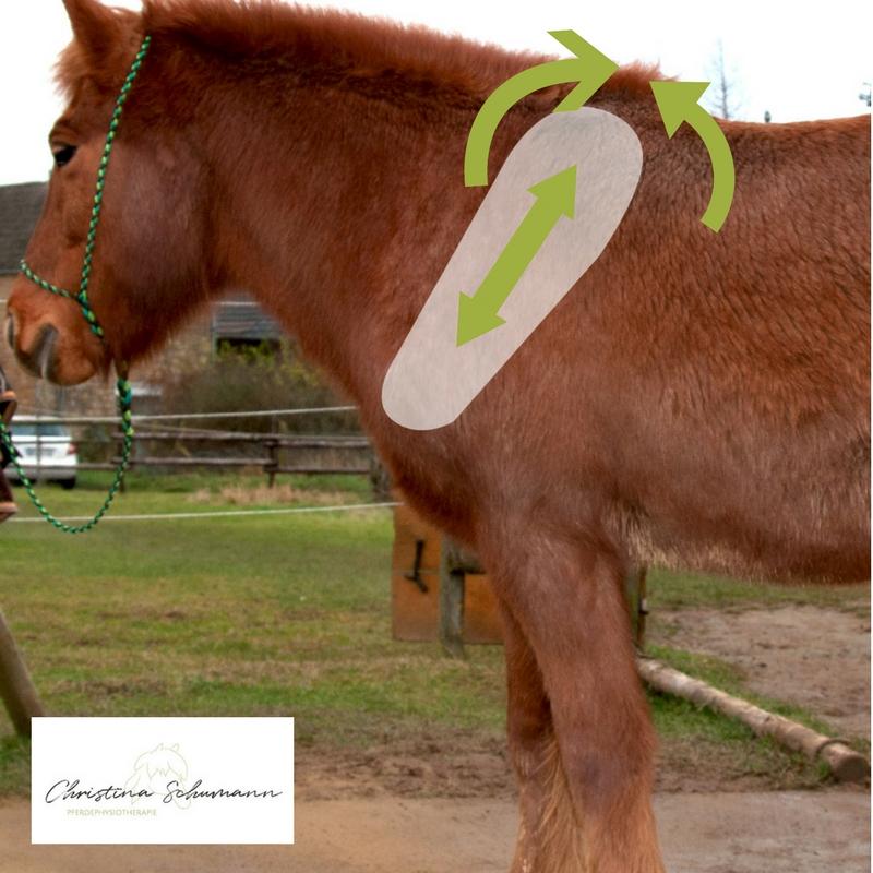 Pferdephysiotherapie Christina Schumann Sattel Schulterblatt Pferd