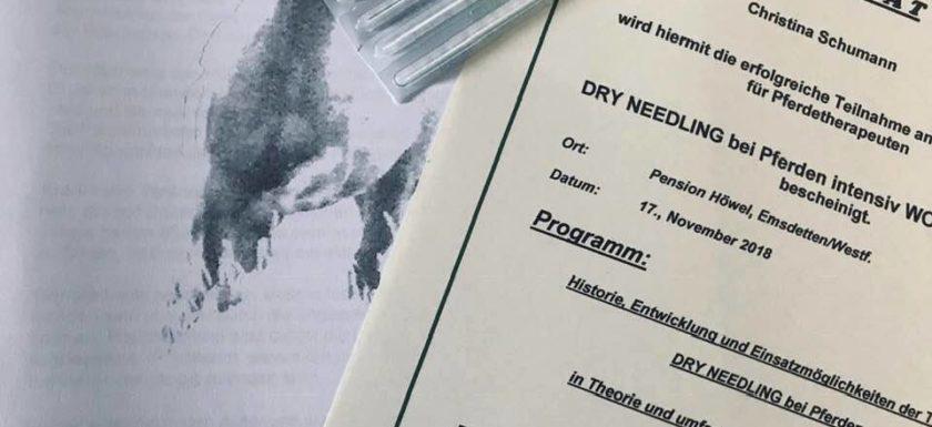 Dry Needling Pferd Düren