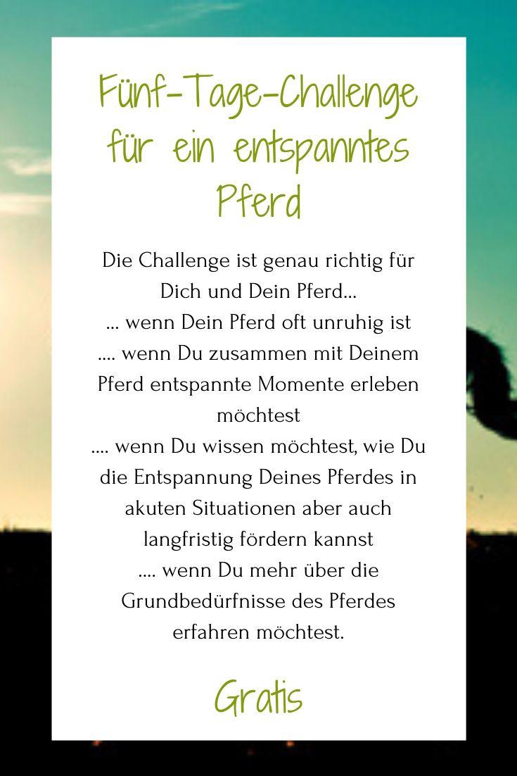 Challenge Pferd Online Entspannung