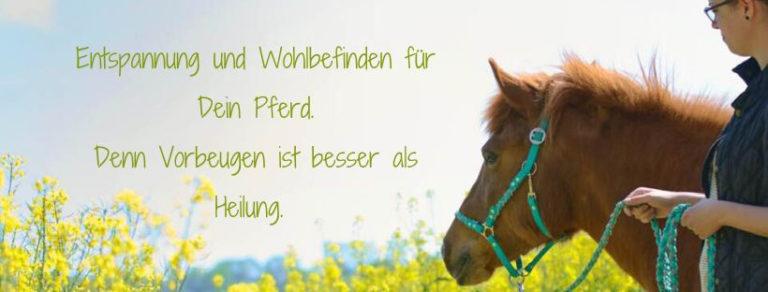 TCM Pferd Düren Futterberatung Physiotherapie Onlinekurs